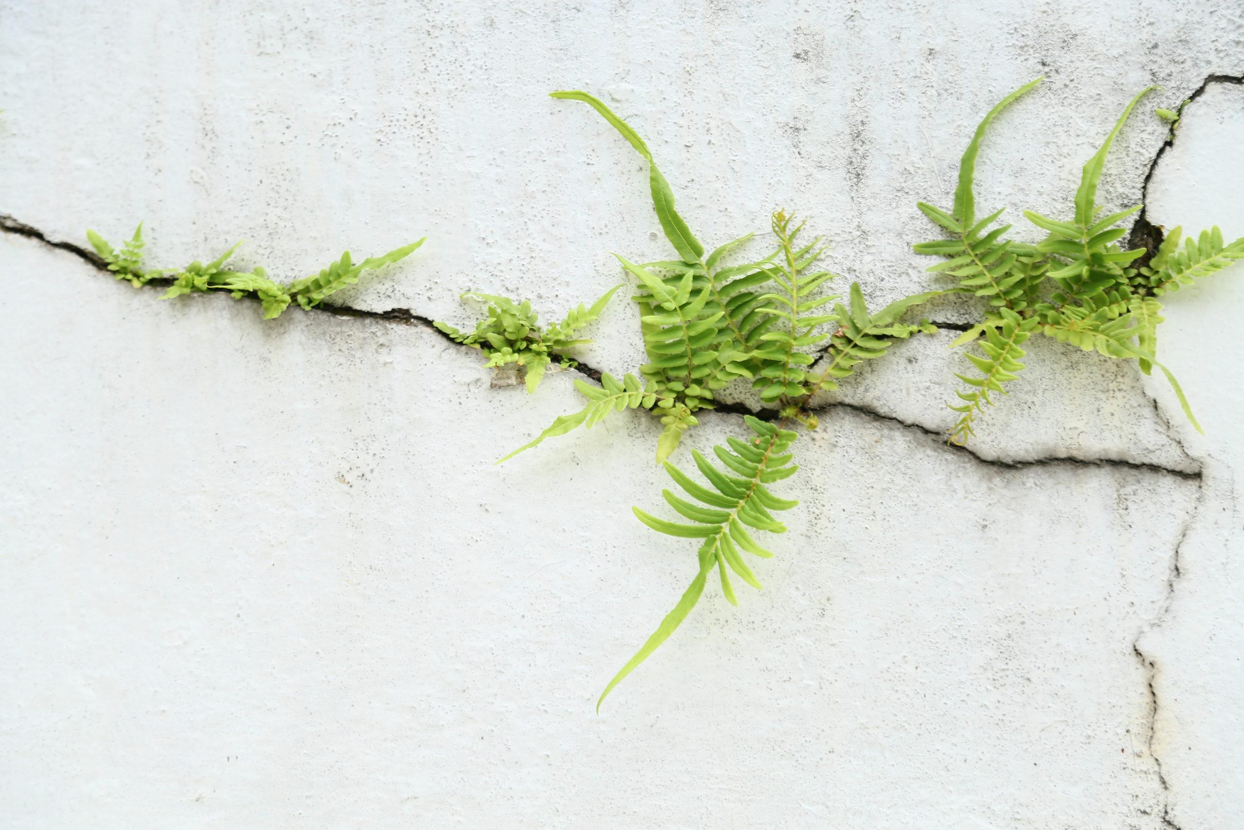 Farn steigert sein Wachstum an einer Wand